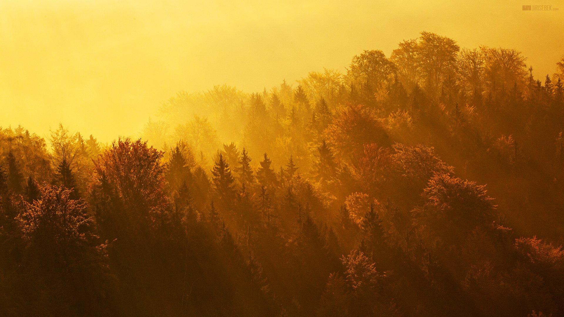 Les v záři zapadajícího slunce